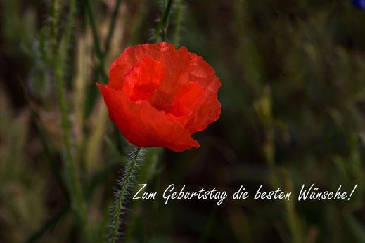 Grusskarte Geburstag - Rote Mohnblume