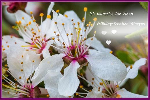 Grusskarte Guten Morgen-Obstbaumblüte weiß