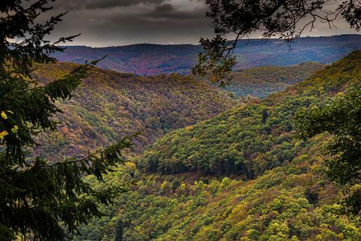 Blick über die Waldlandschaft Eifel