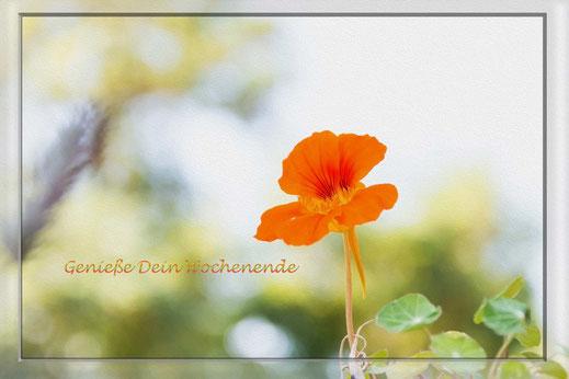 Grusskarte zum Wochenende mit orangefarbener Kapuzinerkresse
