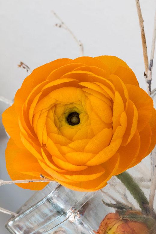 Ranunkel - Blüte in sattem Orange im Glas hochkant