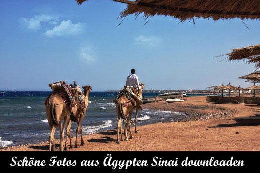 Kamelreiten am Strand im Sinai-Reisefotografie Ägypten