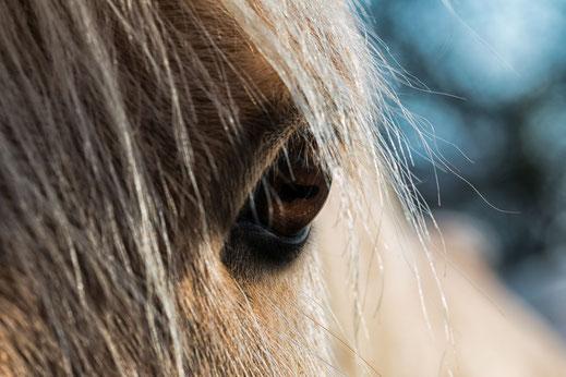 portrait-pferd-auge-makro