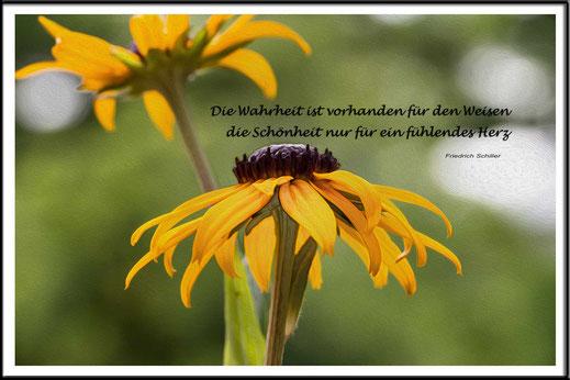 Spruchkarte Zitate Wahrheit-mit Sonnenhutblüten