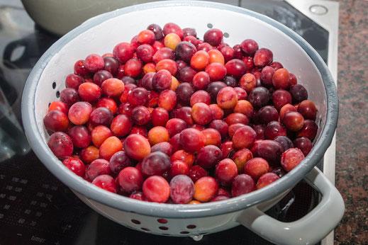 Wildpflaumen gewaschen im Küchensieb