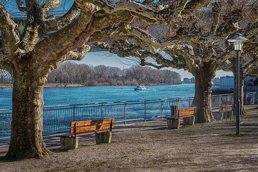 Parkbänke am Rheinufer in Worms © Jutta M. Jenning-www.mjpics.de