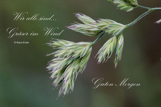 Grußkarte Guten Morgen - Gräser im Wind