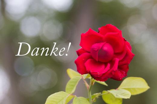 """Grußkarte-""""Danke"""" mit wunderschöner aufgeblühter roter Freilandrose mit Blättern mit Bokeh-Hintergrund"""