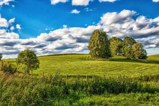 Polen Masuren-Wiese und Bäume © Jutta M. Jenning