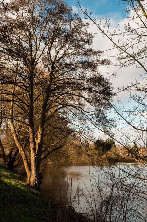 Bäume und Sträucher am See