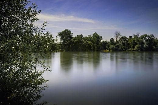 Natur am Flussufer des Mains