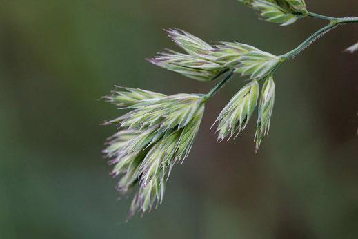 Zum Portfolio Gräser - Vorschau-Wildes Gras