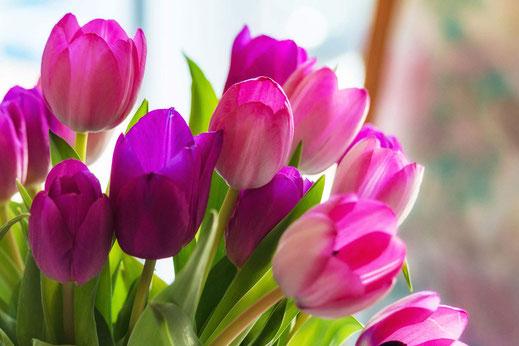 Zum Portfolio Tulpen - Vorschau-Lilafarbener Tulpenstrauß