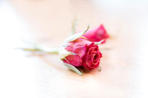 Zarte-kleine-Rose