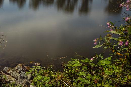 Natur am Mainufer