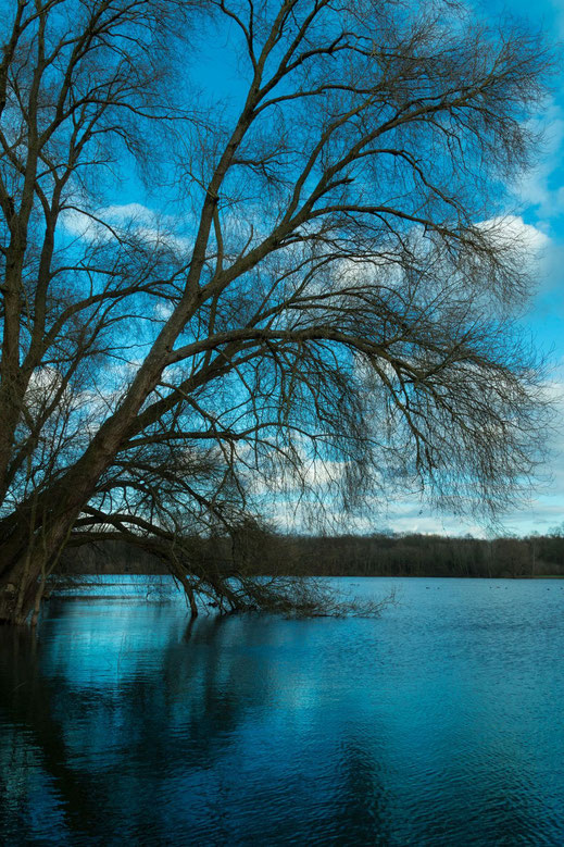 Trauerweide am See blau