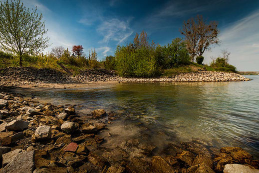 Der Rhein in Gimbsheim © Jutta M. Jenning ♦ mjpics.de