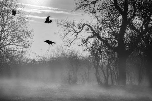 morgen-nebel-im-herbst-monochrome