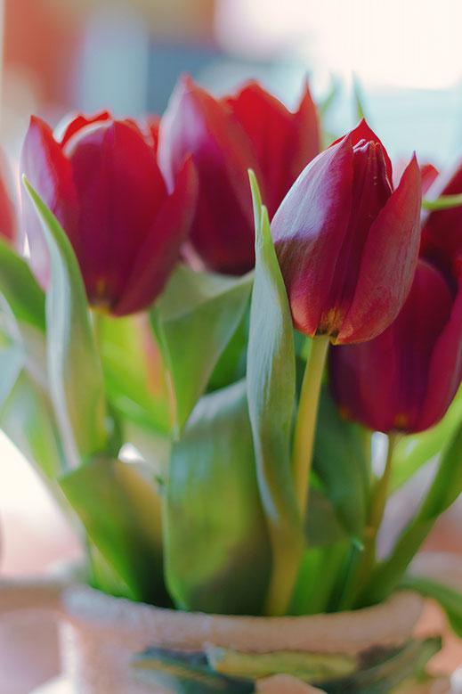 Rote Tulpen in Vase  © Jutta M. Jenning ♦ www.mjpics.de