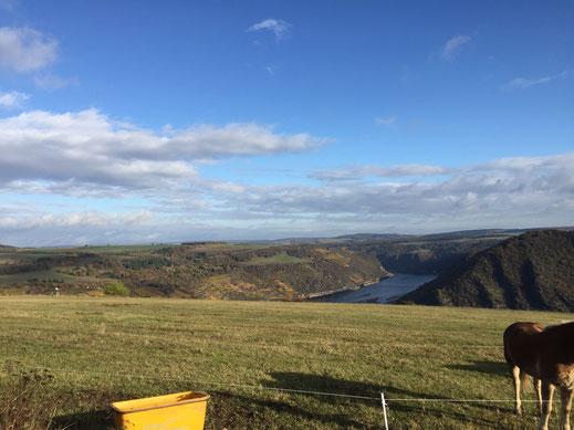 Blick auf den Rhein und die Loreley
