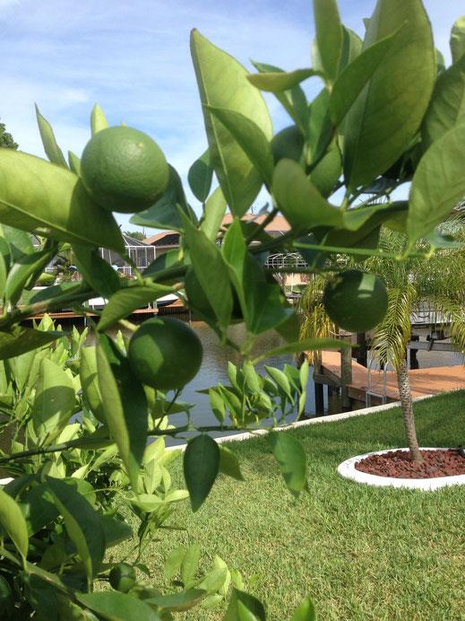 Orangenbaum Ferienhaus Cape Coral Villa Coral Laguna