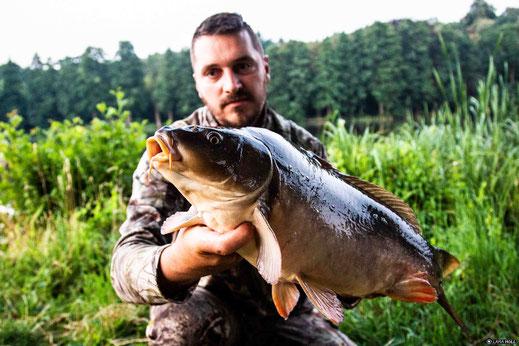 Karpfen Bildfisch Christian Höll 04