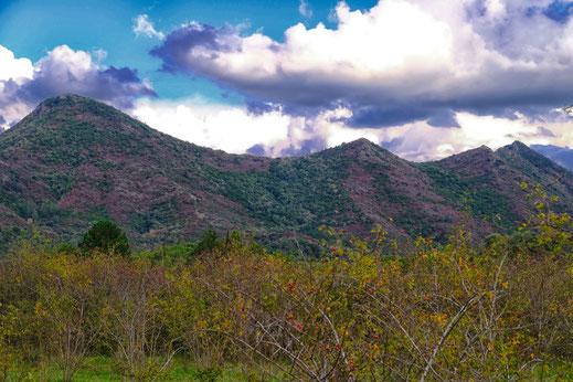 Sentier des Oliviers - Ginoles