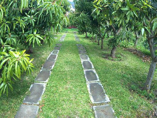 les manguiers de casadamanga
