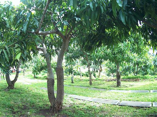 jardin de la location de vacances à Madeire