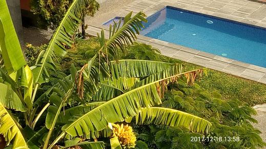 piscine de la location de vacances casadamanga