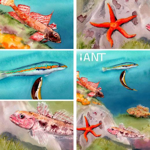 interprétation, pédagogie, sensibilisation, nature, biodiversité, sentier sous marin, panneau pédagogique, Méditerranée, fonds rocheux