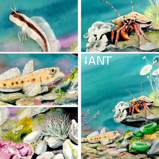 illustration, sous-marin, sentier pédagogique, interprétation, aquarelle, méditerranée