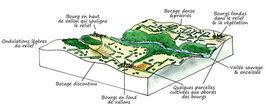 bloc diagramme paysager, paysage, illustrations, illustration paysagère