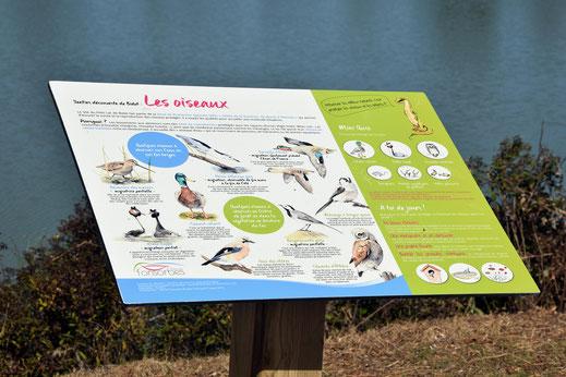 panneau pédagogique, panneaux d'interprétation, zone humide, oiseaux, encart ludique, illustration, illustrateur, nature, biodiversité