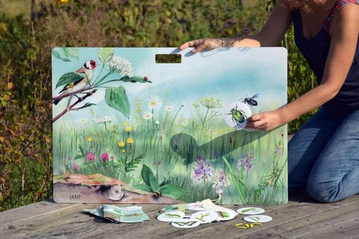 malette pédagogique, kit ludique, pollinisateur, pollinisation, bourdon, abeille, papillon, cycle, prairie