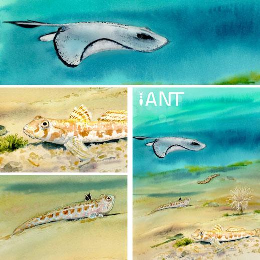 interprétation, pédagogie, sensibilisation, nature, biodiversité, sentier sous marin, panneau pédagogique, méditerranée