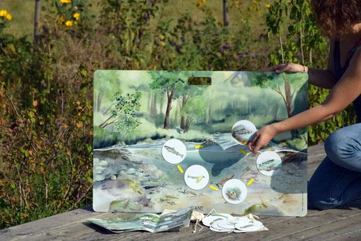 outil pédagogique, nature, rivière, cycle de vie, truite, éphémère, trichoptère, calopteryx, demoiselle, ripisylve, tableau magnétique
