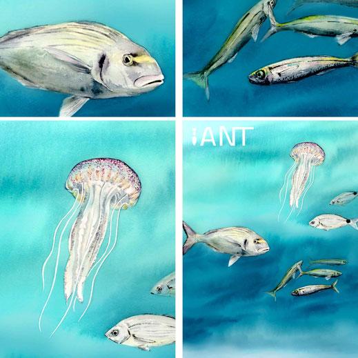 interprétation, pédagogie, sensibilisation, nature, biodiversité, sentier sous marin, panneau pédagogique, Méditerranée, méduse pélagique, dorade
