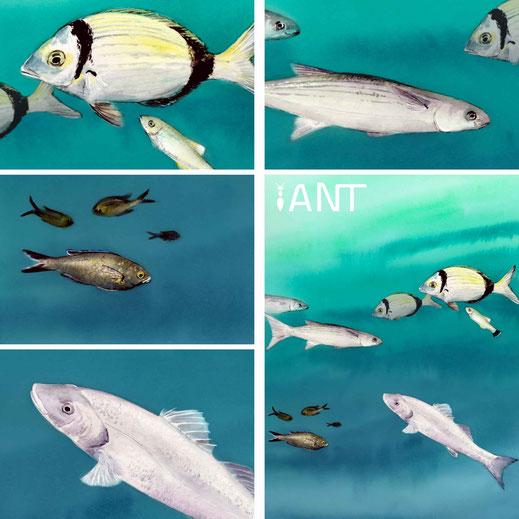 interprétation, pédagogie, sensibilisation, nature, biodiversité, sentier sous marin, panneau pédagogique, Méditerranée, sars
