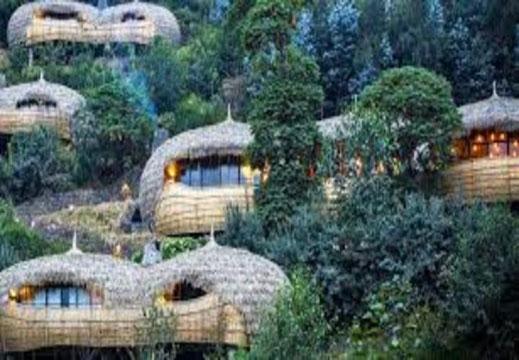 luxury_gorilla_safaris_rwanda.jpg