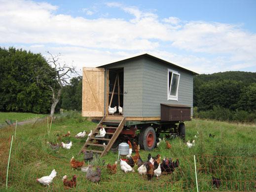 Mobiles Hühnerhaus von Holzhaus Roew