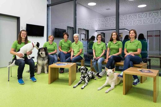 TEAM von vetpix.at - MRT für Hunde, CT für Hunde - Professionelles MRT und CT für Ihren Hund, Ihre Katze - vetpix.at