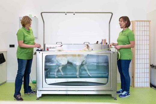 Hydrotrainer für Hunde und Kleintiere - begleitende Therapie für Ihren Hund - bei vetpix.at