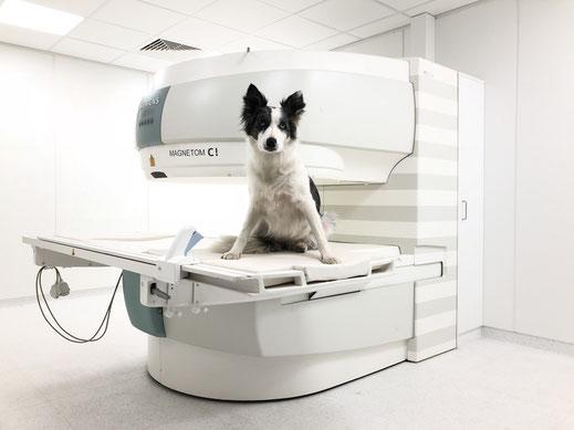 MRT für Hunde, Katzen und Kleintiere, Magnet-Resonanz-Thomographie - professionelle Diagnose für Ihren Hund bei vetpix.at Augsburg
