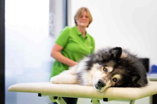 Physiotherapie für Hunde und Kleintiere bei vetpix.at - Begleitende Therapie für Ihren Hund