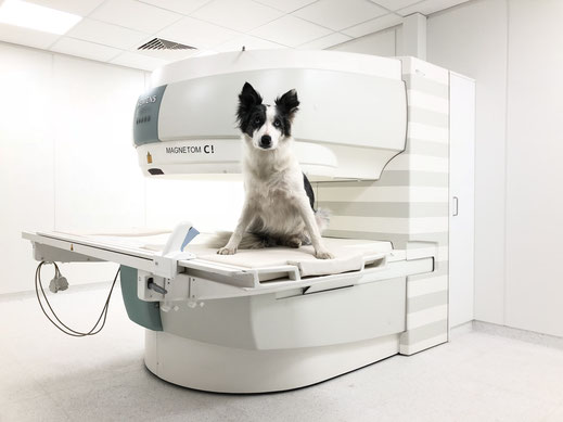 MRT für Hunde, Katzen und Kleintiere Region Salzburg Magnet-Resonanz-Thomographie - professionelle Diagnose für Ihren Hund bei vetpix.at