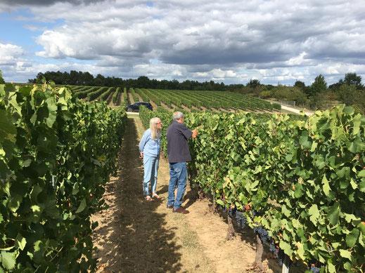 Bergerac wine tour