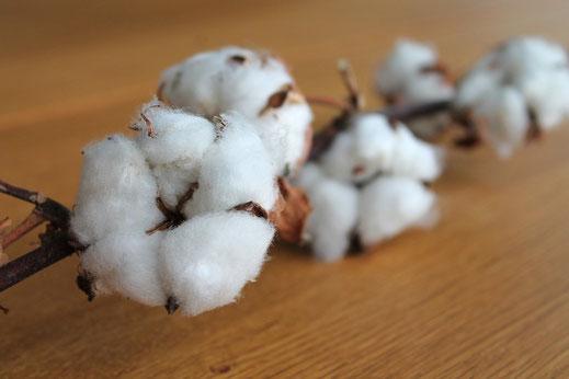 1 an de Mariage : Célébrer les Noces de Coton
