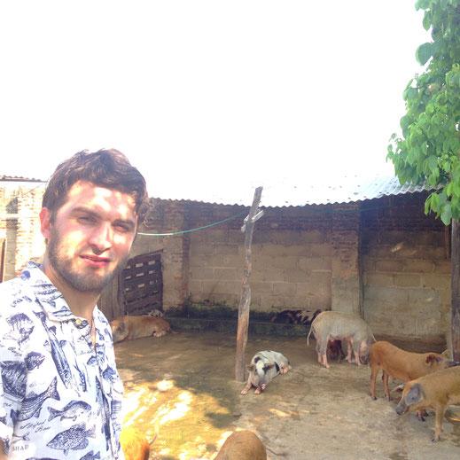 Philip mit kolumbianischen Haus-Schweinen