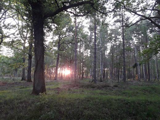BIVOUAC NATURE EN SOLOGNE : 5 et 6 juin 2021 au cœur du Domaine forestier de Cheverny (Loir-et-Cher)